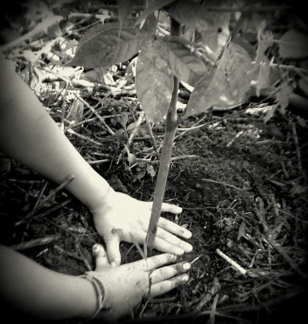 To Plant Trees is to Give Body and Life to One's Dreams of a Better World.       'Russel Page'