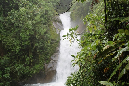 Caldron falls at the far end of the Cloudbridge Reserve bordering Chirripo National Park: This high-energy stream, fed by incessant Costa Rican rainfall, has so much energy that it erodes through the strong Chirripó Granodiorite, a crystalline rock.  The absence of similarly powerful rivers near the top of Cerro Chirripó is surprising.  The waterfall here is about 1 km from the Cloudbridge Reserve entrance.