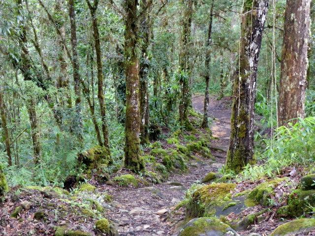 Chirripo trail