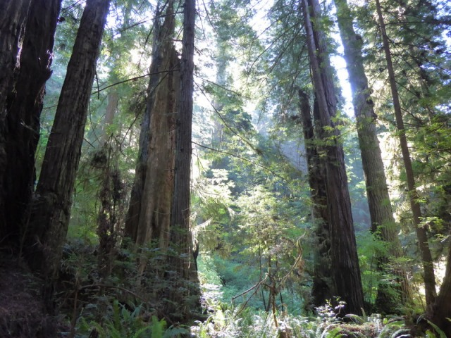 Redwood State Park, California