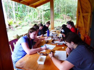 Sketching class in the jungle. Linda gave them some art instruction that they could hopefully use for field notes or in a travel diary