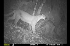 Puma-July